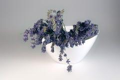 Verse lavendel Royalty-vrije Stock Fotografie