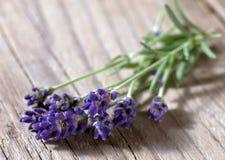 Verse lavendelbloemen Royalty-vrije Stock Foto
