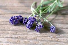 Verse lavendelbloemen op houten achtergrond Stock Fotografie