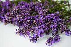 Verse lavendelbloemen stock afbeeldingen