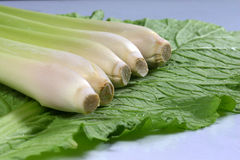 Verse lemongrasses op de groene koolzaadachtergrond Stock Fotografie