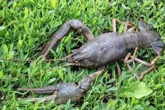Verse levende kanker op groen gras stock foto