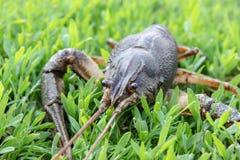 Verse levende kanker op groen gras stock fotografie