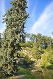 Verse levendige groene vegetatie met bloemen en rots in openluchtpark Pruhonice dichtbij Praag, Tsjechische Republiek in zonnige  Stock Foto