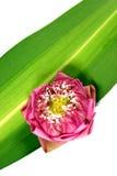 Verse lotusbloem royalty-vrije stock fotografie