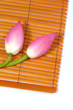 Verse lotusbloem royalty-vrije stock foto