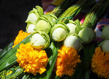 Verse lotusbloem met gele bloem Stock Foto