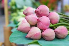 Verse lotusbloembloemen Royalty-vrije Stock Foto