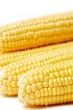 Verse maïs die op wit wordt geïsoleerde Stock Foto
