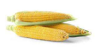 Verse maïskolven, Royalty-vrije Stock Foto