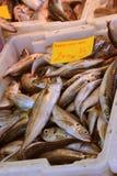 Verse makreel bij de marktkraam Royalty-vrije Stock Afbeeldingen