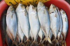 Verse makreel in markt Royalty-vrije Stock Foto's