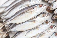 Verse Makreel op een marktkraam in Thailand Royalty-vrije Stock Foto's