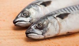 Verse makreel twee Stock Afbeelding