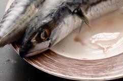 Verse makreel voor het koken op een zwarte achtergrond stock fotografie