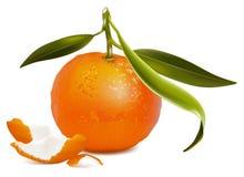 Verse mandarijn met groene bladeren en mandarijnpe vector illustratie