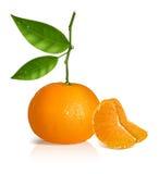 Verse mandarijn met groene bladeren en plakken. vector illustratie
