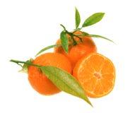 Verse mandarijnen stock afbeelding