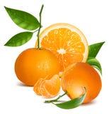 Verse mandarijnen met groene bladeren en sinaasappel. royalty-vrije illustratie