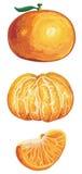 Verse mandarijnreeks vector illustratie
