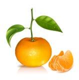 Verse mandarijnvruchten met groene bladeren. vector illustratie