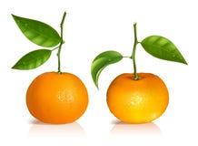 Verse mandarijnvruchten met groene bladeren. royalty-vrije illustratie