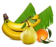 Verse mandarijnvruchten met groene bladeren, banaan a royalty-vrije illustratie