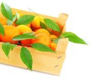 Verse mandarins Royalty-vrije Stock Afbeelding