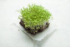 Verse micro- greens om het lichaam te verbeteren, verliezen gewicht en ontgiften royalty-vrije stock foto's