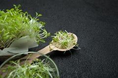 Verse micro-groene spruiten van slasalade voor een gezonde vegetarische keuken Het concept ontgifting, dieet Ruimte voor tekst stock foto