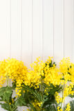 Verse mimosabloem op houten lijst stock foto's