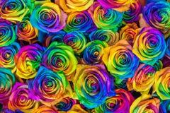 Verse mooie trillende veelkleurige rozenbloemen voor bloemenachtergrond De regenboog kleurde unieke en speciale rozen bovenkant Stock Afbeeldingen