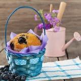 Verse Muffins Stock Foto