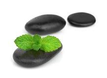 Verse munt op de zwarte stenen met dalingen Stock Afbeelding