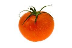 Verse natte tomaat Royalty-vrije Stock Foto