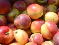 Verse Nectarines bij een Landbouwersmarkt Royalty-vrije Stock Foto's