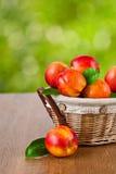 Verse nectarines in de mand Stock Foto