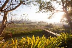 Verse ochtendmening met gras en boom bij Noordelijk deel van Thailand Stock Afbeelding
