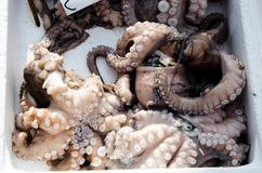 Verse octopus Stock Foto