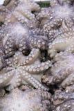 Verse octopus op vertoning bij vissenmarkt Royalty-vrije Stock Foto's
