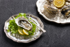 Verse oester op plaat Stock Foto's
