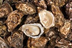 Verse oester voor een goede lunch stock afbeeldingen