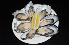 Verse Oesters Royalty-vrije Stock Afbeelding