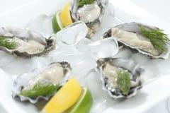 Verse oesters stock afbeeldingen