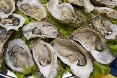 Verse oesters royalty-vrije stock afbeelding