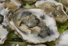 Verse oesters royalty-vrije stock foto