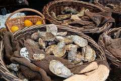 Verse oesters bij markt Stock Afbeeldingen