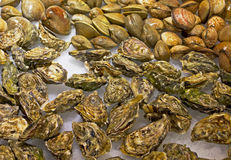 Mosselen en oesters Royalty-vrije Stock Foto's