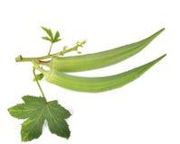 Verse okra of groene roselle op witte achtergrond Stock Foto
