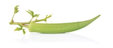 Verse okra op een witte achtergrond Royalty-vrije Stock Foto's